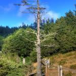 """""""0106 Ecola State Park Oregon"""" by vincentlouis"""