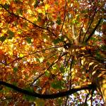 """Autumn colours"" by Berezvai"