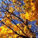 """Autumn colours 2"" by Berezvai"