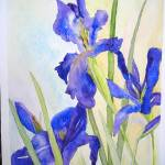 """Japanese Irises"" by lindahaile"