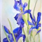 """""""Japanese Irises"""" by lindahaile"""