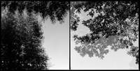 two visions-diptych