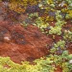 """""""Lichen on Red Rock"""" by Jokehawk"""