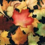 """""""Leaves 5"""" by cgcinc"""
