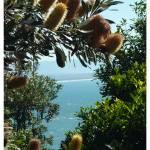 """""""Byron Bay"""" by kiwihighlander"""
