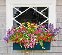 Window Flower Box in pink,yellow,green and purple