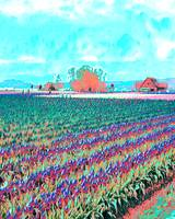 psychedelic tulip field WA state