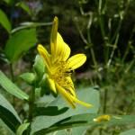 """Profile in Yellow"" by amateurphotoart"