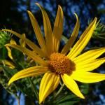"""Bright Summer Sun"" by amateurphotoart"