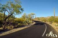 A Drive Through Saguaro