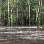 """The forest along the Amazon River"" by DaveMaguire"