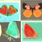"""4butterflies"" by laurenmcmullen"