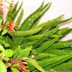 """""""Asparagus fern"""" by rbb2676"""