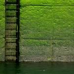 """Ladder"" by BrianMadden"