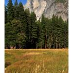 """Half Dome from the meadow"" by mblaisdellphoto"