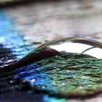 """""""Clarity"""" by taralemana"""