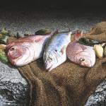 """""""Sea Food Still Life"""" by MarkCross"""