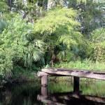 """""""Riverbend Park Bridge"""" by CynthiaMBarlow"""