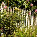 """""""Pickett Fence2"""" by earthlyimages"""
