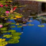"""""""Lilly pond"""" by earthlyimages"""