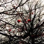 """bennett park in january"" by heather_allison"