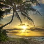 """hawaii_palm_sunset_HDR"" by mattdevino"