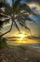 hawaii_palm_sunset_HDR