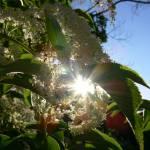 """""""Sunny Flower"""" by amateurphotoart"""