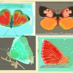 """4butterflies"" by laurenmcmullen"