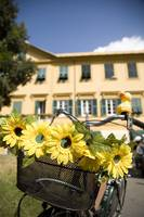 Sunflowers on bike