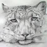 """Snow Leopard - 1"" by AlanPickersgill"