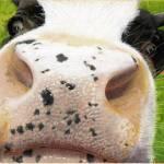 """Cow No. 0651"" by CarolMcCarty"