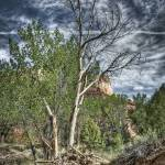 """Ghost Ranch Foliage"" by jorsillo"