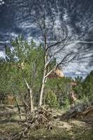 Ghost Ranch Foliage