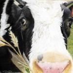 """Cow No. 0652"" by CarolMcCarty"