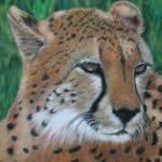 """Cheetah"" by CarolMcCarty"