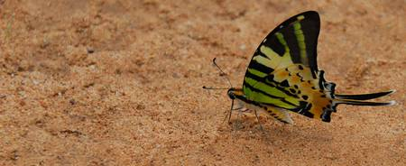 Schmetterling2