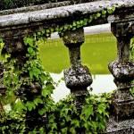 """""""Štanjel - Ivy fence"""" by Maaaja"""