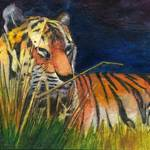 """Reclining Tiger"" by ACastelli"