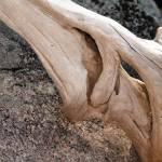 """""""Driftwood"""" by lakoz"""