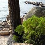 """Maine Shore"" by lakoz"