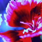 """""""Flower"""" by parakeetart"""