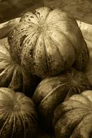 Pumpkins In Sepia