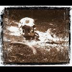 """Elephant Grave"" by TreePruitt"