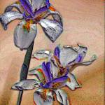 """Iris"" by Bob_Wall"