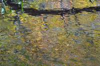 Impressionist Reflection 2