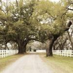 """Plantation Lane"" by TallyAnn"