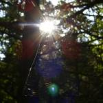 """Web"" by amateurphotoart"