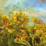 """Sunflower field"" by ArteSigno"