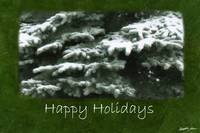 Snow-Covered Evergreen Branches - Happy Holidays